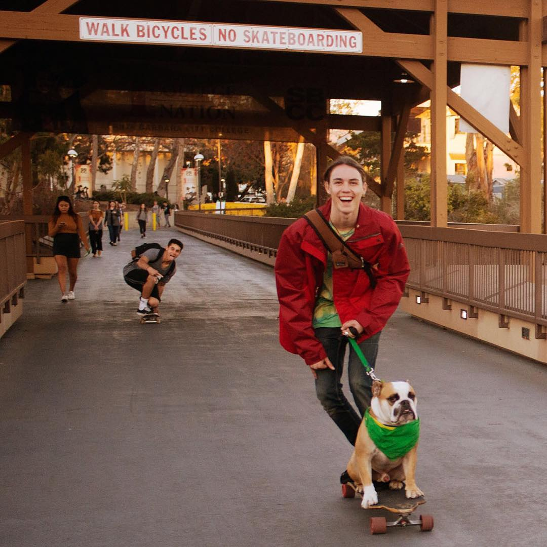 Leaving work one day I just happened to decide to carry my camera with me and then this happened. A bulldog on a skateboard below a no skateboarding sign. Photo by John Thomas Rose