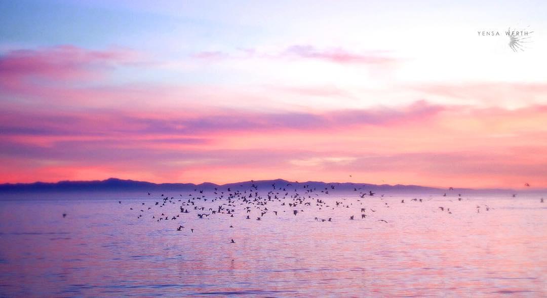 Flock of Birds- Photo by Yensa Werth