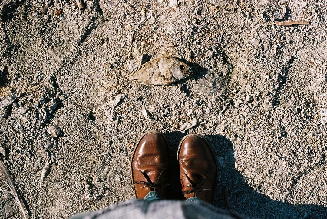 Don Brubaker - dead fish Salton Sea