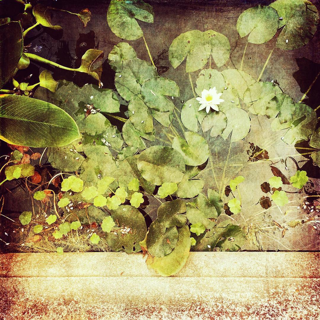 Image by Janet Reid - Photograph Your Love Instagram Takeover